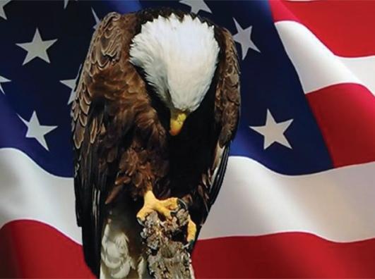 eagle head bowded